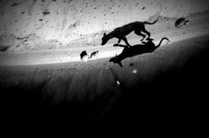 Fotografia comentada em sala de aula. Cão e sombra se confundem produzindo ilusão de ótica.  Foto: Paulo Carrano